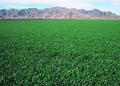 NRCSAZ02041 - Arizona (365)(NRCS Photo Gallery).tif