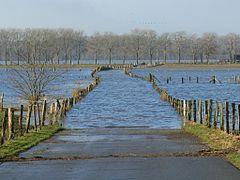 NRW NSG Bislicher Insel Rheinhochwasser 01 2011 Stadsweide P1480993.jpg