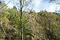 NSG Steinbruch Holzmühle (109).jpg