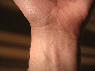 Wrist Part of the arm between the lower arm and the hand