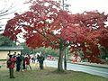 Nara-Japon09.jpg