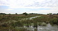 Nationaal Park Drents-Friese Wold. Locatie Fochteloërveen 05.JPG
