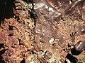 Native copper vein (Mesoproterozoic, 1.05-1.06 Ga; Great Sand Bay, Keweenaw County, Upper Peninsula of Michigan, USA) 5 (17115966378).jpg