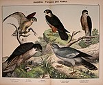 Natural history of the animal kingdom for the use of young people (Plate IV) (5974386523).jpg