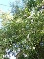 Nature in Smolensk - 71.jpg
