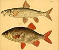 Naturgeschichte in Bildern mit erläuterndem Text (Taf. CXXXV) (6059230042).jpg