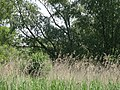Naturschutzgebiet Heuckenlock 21.05.2014 16.JPG