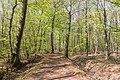 Naturschutzgebiet Königsdorfer Forst-7290.jpg
