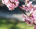 Niceflowers.jpg