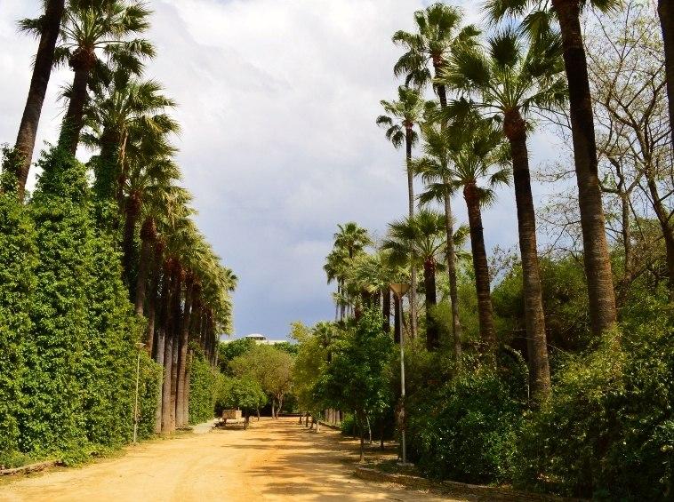 Nicosia Public gardens tall palm trees Nicosia Republic of Cyprus