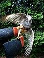 Not A Tern (3593906484).jpg