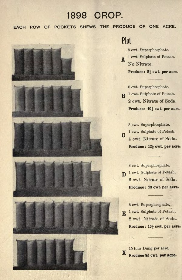1898 CROP. EACH ROW OF POCKETS SHEWS THE PRODUCE OF ONE ACRE. Plot A 8 cwt. Superphosphate. 1 cwt. Sulphate of Potash. No Nitrate. Produce : 8¼ cwt. per acre. B 8 cwt. Superphosphate. 1 cwt. Sulphate of Potash. 2 cwt. Nitrate of Soda. Produce : 10¼ cwt. per acre. C 8 cwt. Superphosphate. 1 cwt. Sulphate of Potash. 4 cwt. Nitrate of Soda. Produce : 12½ cwt. per acre. D 8 cwt. Superphosphate. 1 cwt. Sulphate of Potash. 6 cwt. Nitrate of Soda. Produce : 13 cwt. per acre. E 8 cwt. Superphosphate. 1 cwt. Sulphate of Potash. 8 cwt. Nitrate of Soda. Produce : 15¼ cwt. per acre. X 15 tons Dung per acre. Produce 9¾ cwt. per acre.