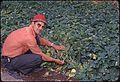 ONeil with plants, circa 1965 (7951551546).jpg