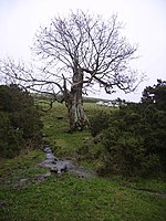 Old Ash, Sara Beck - geograph.org.uk - 301876.jpg