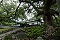 Old Tree Shoren-In Kyoto - panoramio.jpg