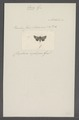 Omia - Print - Iconographia Zoologica - Special Collections University of Amsterdam - UBAINV0274 057 16 0005.tif