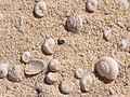 Only sand^ dunes near corralljo - panoramio.jpg
