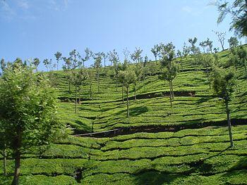 Ooty-India.jpg