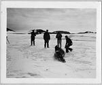 Operation Windmill Expedition Members Photographing a Seal (5243256277).jpg