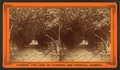 Orange archway on Mr. Ball's place, known as Lover's Lane, from Robert N. Dennis collection of stereoscopic views 5.png