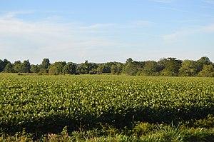 Massie Township, Warren County, Ohio - Fields on Oregonia Road