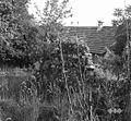 Ostanki starega Štitnikovega hleva, Male Lipljene 1964.jpg