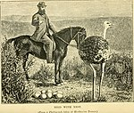 Ostrich farming in South Africa. Being an account of its origin and rise; how to set about it; the profits to be derived; how to manage the birds; the capital required; the diseases and difficulties (14565037178).jpg