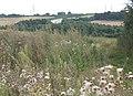 Overgrown field corner - geograph.org.uk - 935238.jpg