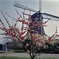 Overzicht - Vreeland - 20363745 - RCE.jpg