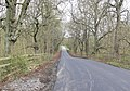 Owston Wood Road - geograph.org.uk - 757730.jpg