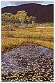 Ozegahara in Autumn - panoramio.jpg