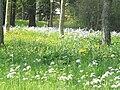 P1110852 Arboretum Bourbonne les Bains floraison.JPG