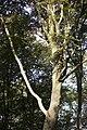 PM 112977 B Koppenberg.jpg