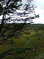 PN Tierra del Fuego 08.jpg