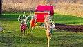 POLAR EXPRESS™ Village Santa's Sleigh and Reindeer - panoramio.jpg