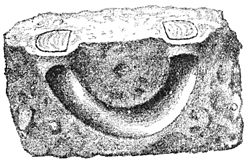 PSM V38 D203 Section view of the curved burrow of stothis astuta.jpg