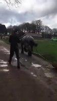 File:Paardenkracht ruimt stormschade op.webm
