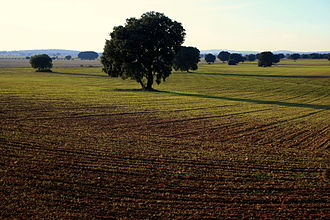 La Mancha - Landscape of the fields in La Mancha