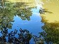 Palanga Botanical Park. Reflections. 2018(4).jpg