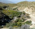 Palm Canyon water 2.jpg