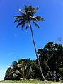 Palm tree in Queensland, Australia, on the beach..jpg