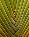Palms (1584688158).jpg
