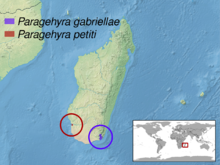 Paragehyra sp. distribution.png