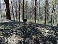 Parambikulam Tiger Reserve - panoramio (7).jpg