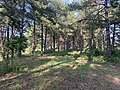 Parc Marquenterre - Saint-Quentin-en-Tourmont (FR80) - 2021-05-29 - 9.jpg