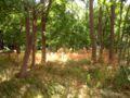 Park Dranske-Lancken - Park 1.jpg