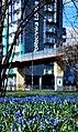 Park Klepacza, Scilla siberica, April 2018 12.jpg