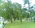 Park Konstytucji 3 Maja w Suwałkach - panoramio.jpg