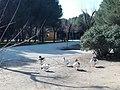Parque Infanta Elena (Sevilla) 13.jpg