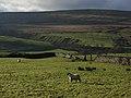 Pastures, Ashgillside - geograph.org.uk - 286401.jpg